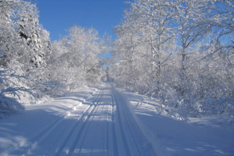 Cross-country ski trail at Centre Dansereau. Credit: quebecoriginal.com.