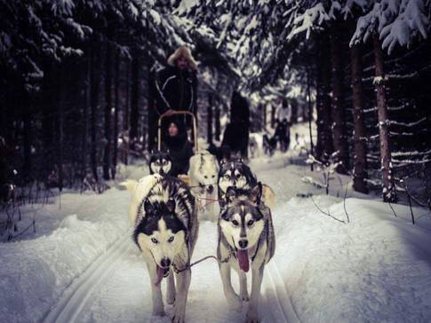 Dogsled ride. Credit: quebecoriginal.com.