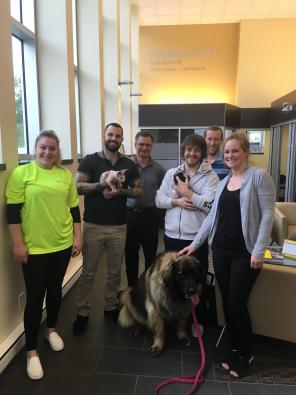 Promutuel gets healthy with animal therapy